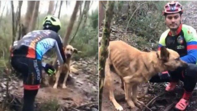 Ciclistas salvam cão amarrado a uma árvore na Serra de Pias em Valongo 2