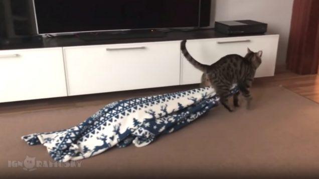 Gato furtivo rouba cobertor de casa e sai como se ninguém estivesse a ver