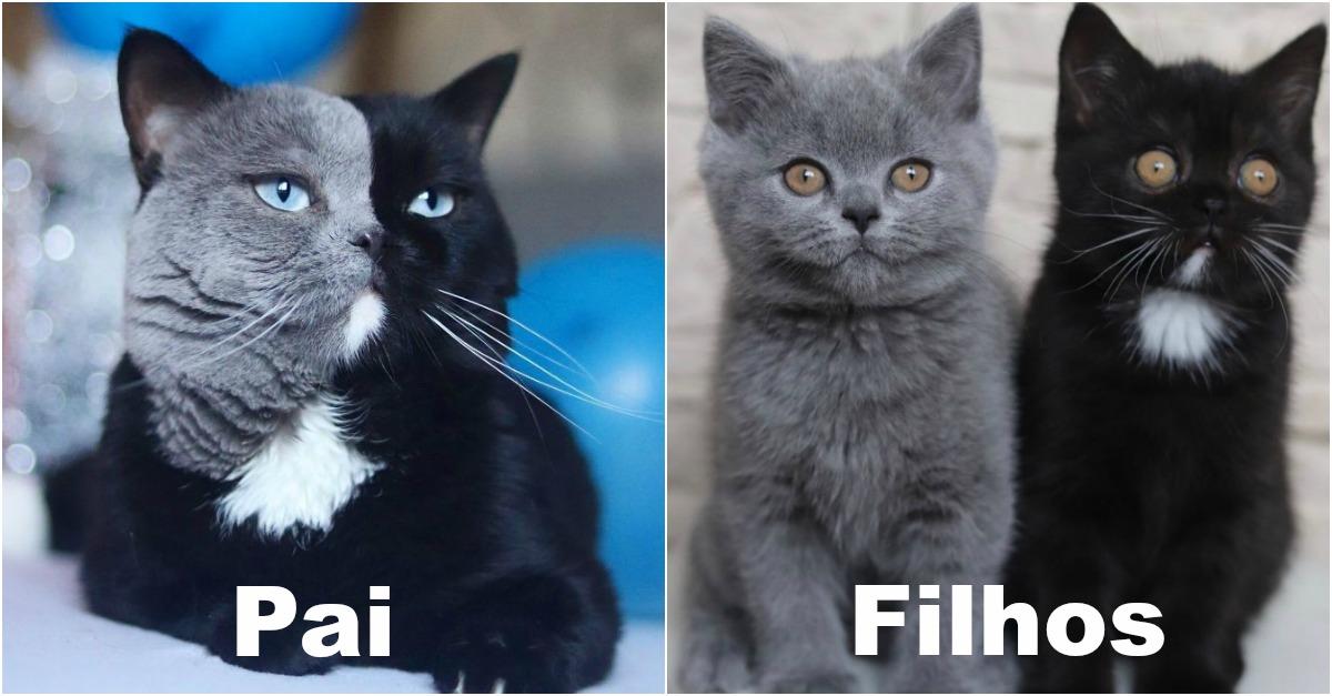 Gato-com-a-cara-de-duas-cores-torna-se-pai-e-tem-um-filhote-de-cada-cor.jpg